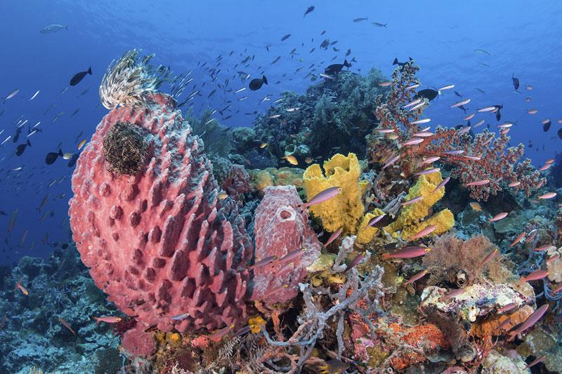 IDN_Wakatobi-Resort-UW-House-Reef-©-Wakatobi-Resort-WS002.jpg