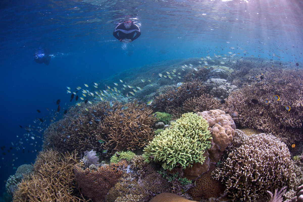 IDN_Bunaken-Marine-Park-uw-©15-Thomas-Baechtold-0299.jpg