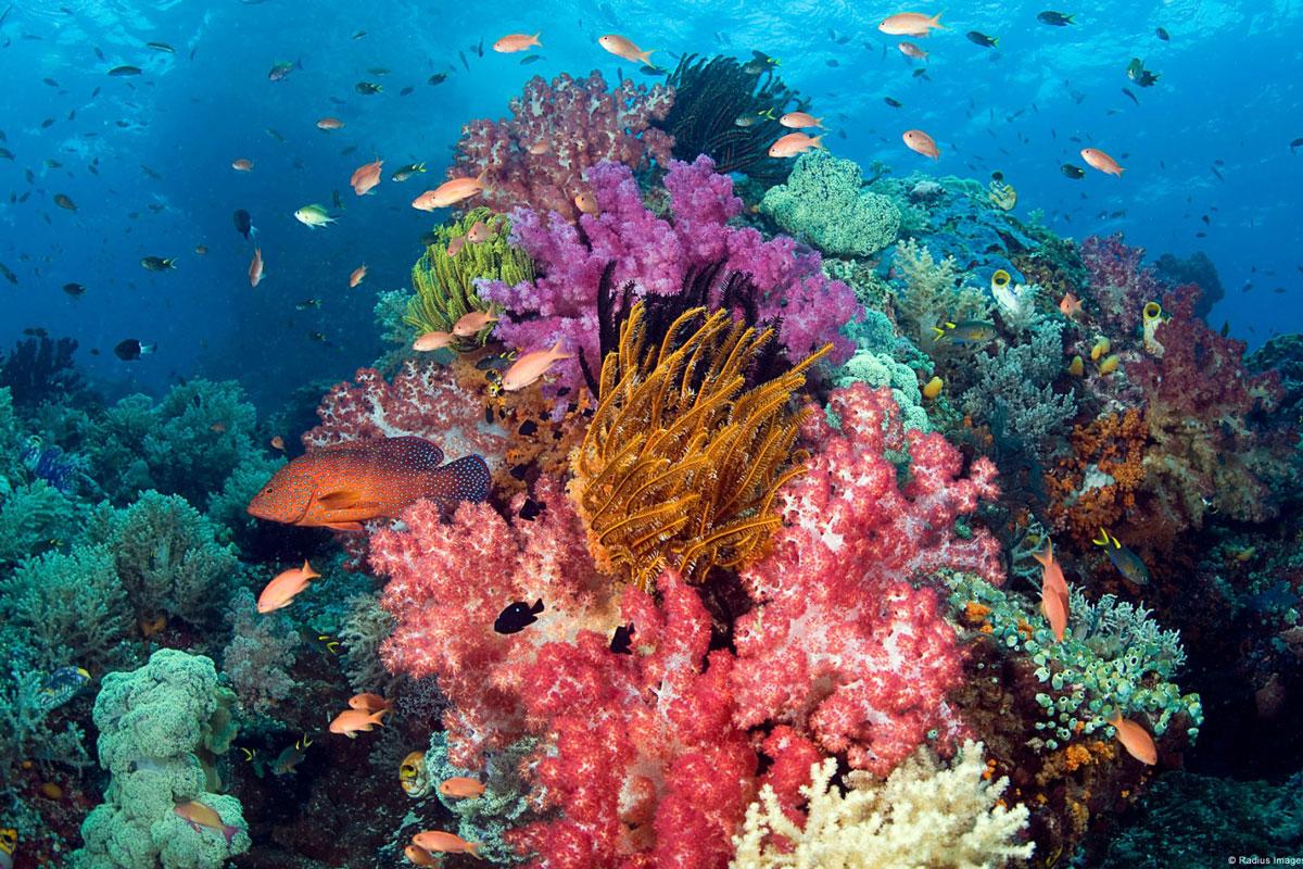 IDN_Reef-002.jpg