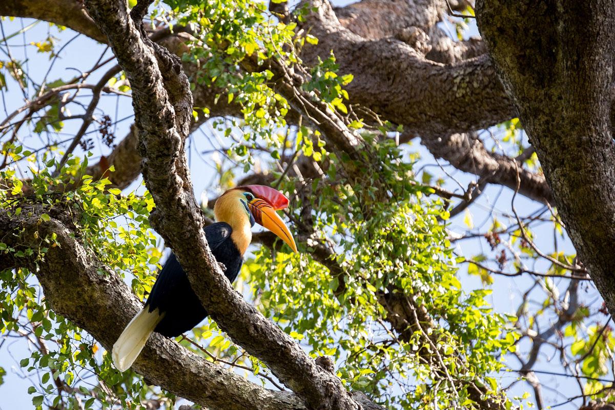 IDN_Tangkoko-National-Park-©-Lembeh-Resort-z84iePOX.jpg