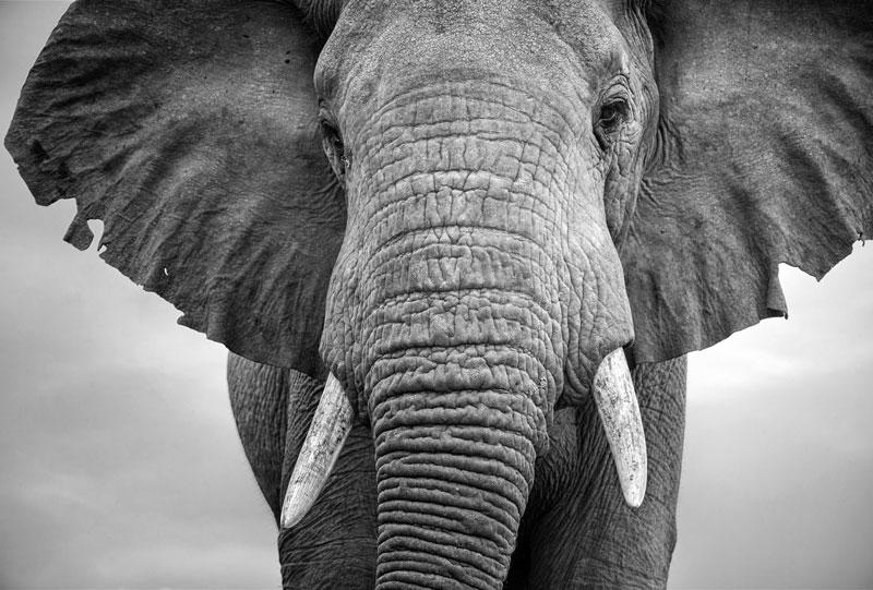 BWA_Botswana-Elephant-©-AdobeStock_176175683.jpg