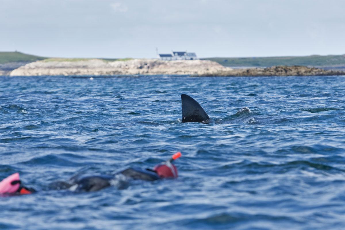 GBR_Scotland-Coll-Island-UW-Basking-Shark-©-AdobeStock_168969559.jpg