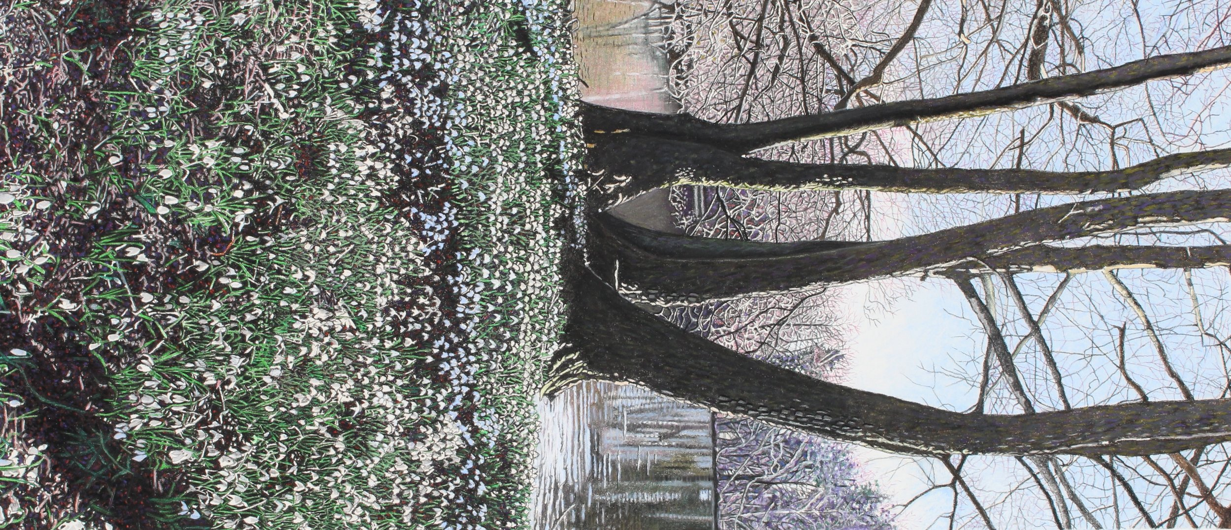 Les Brown SNOWDROPS,BELTON HOUSE,   LINCOLN.jpg