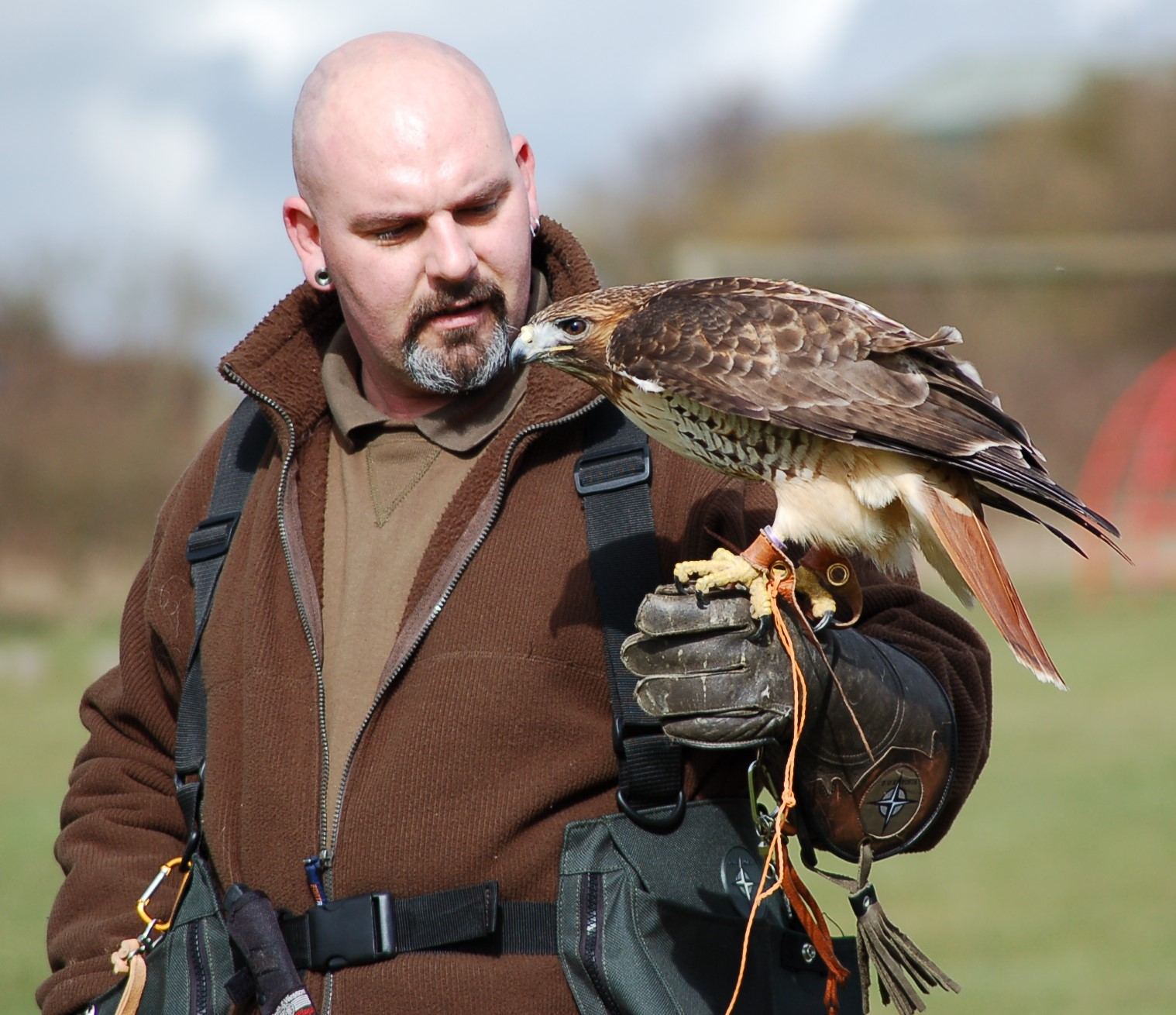 Training session with my American Red Tailed Hawk