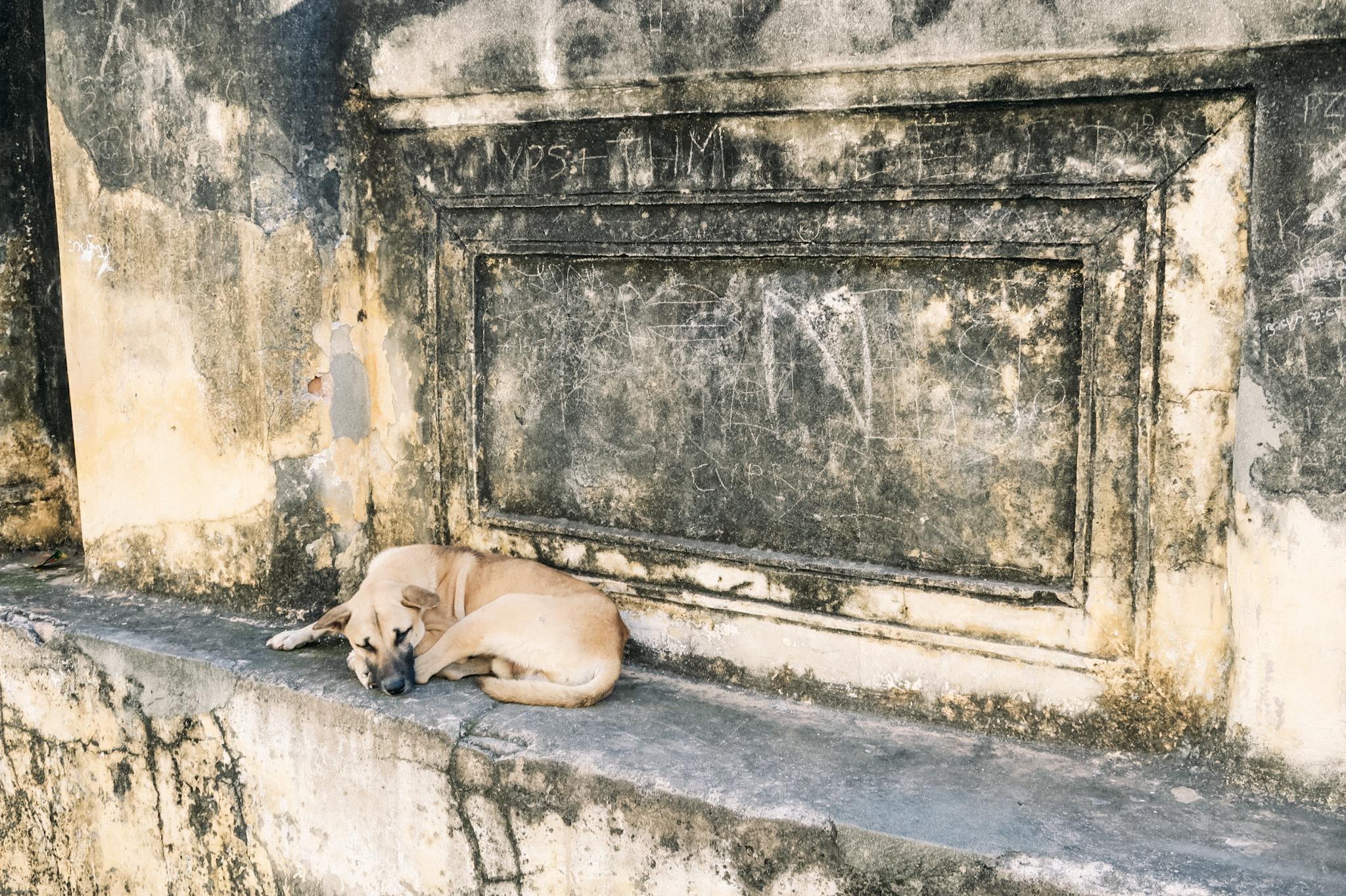 Yadana Hsemee Pagoda and puppy