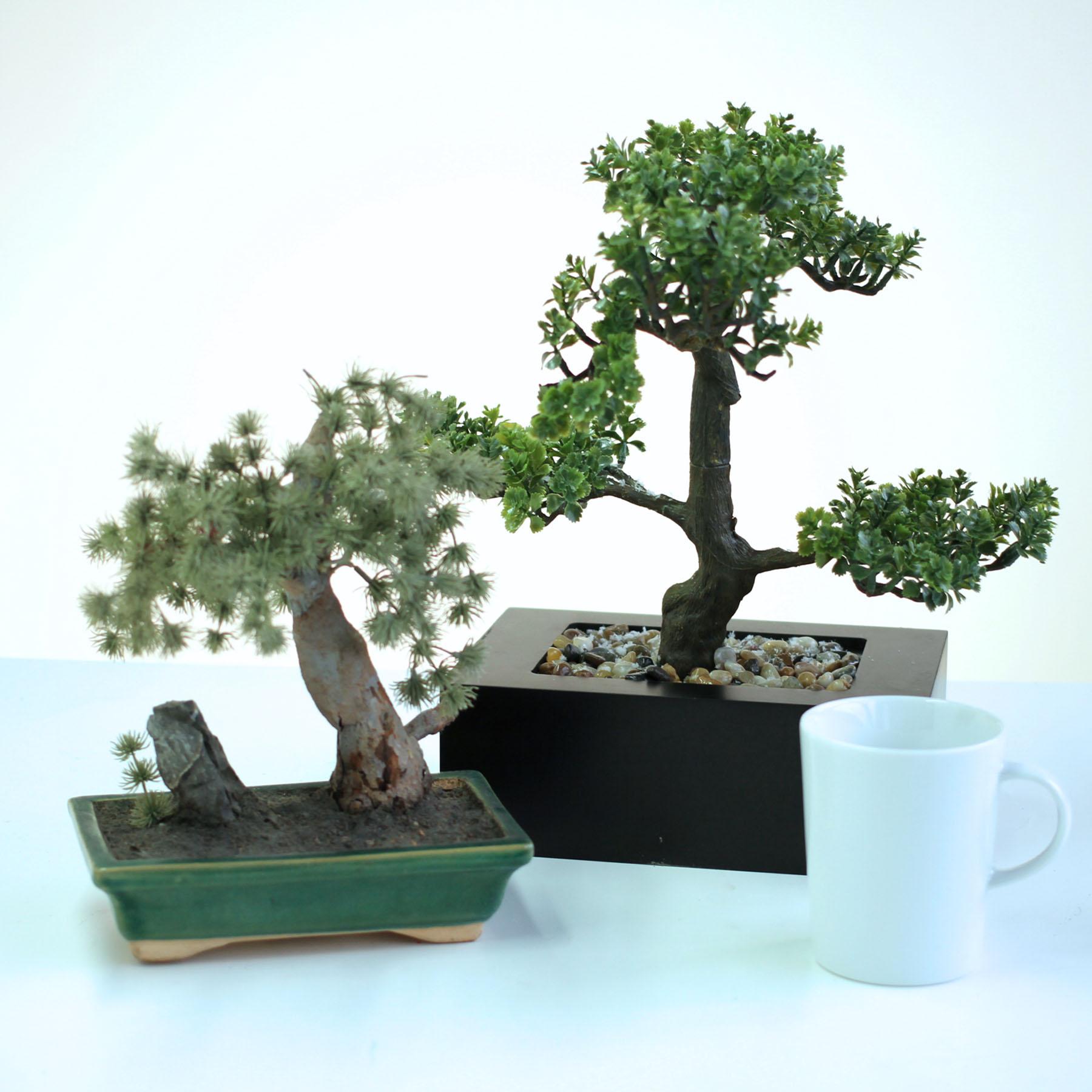 Plants. Pots. Greenery. Gardening.