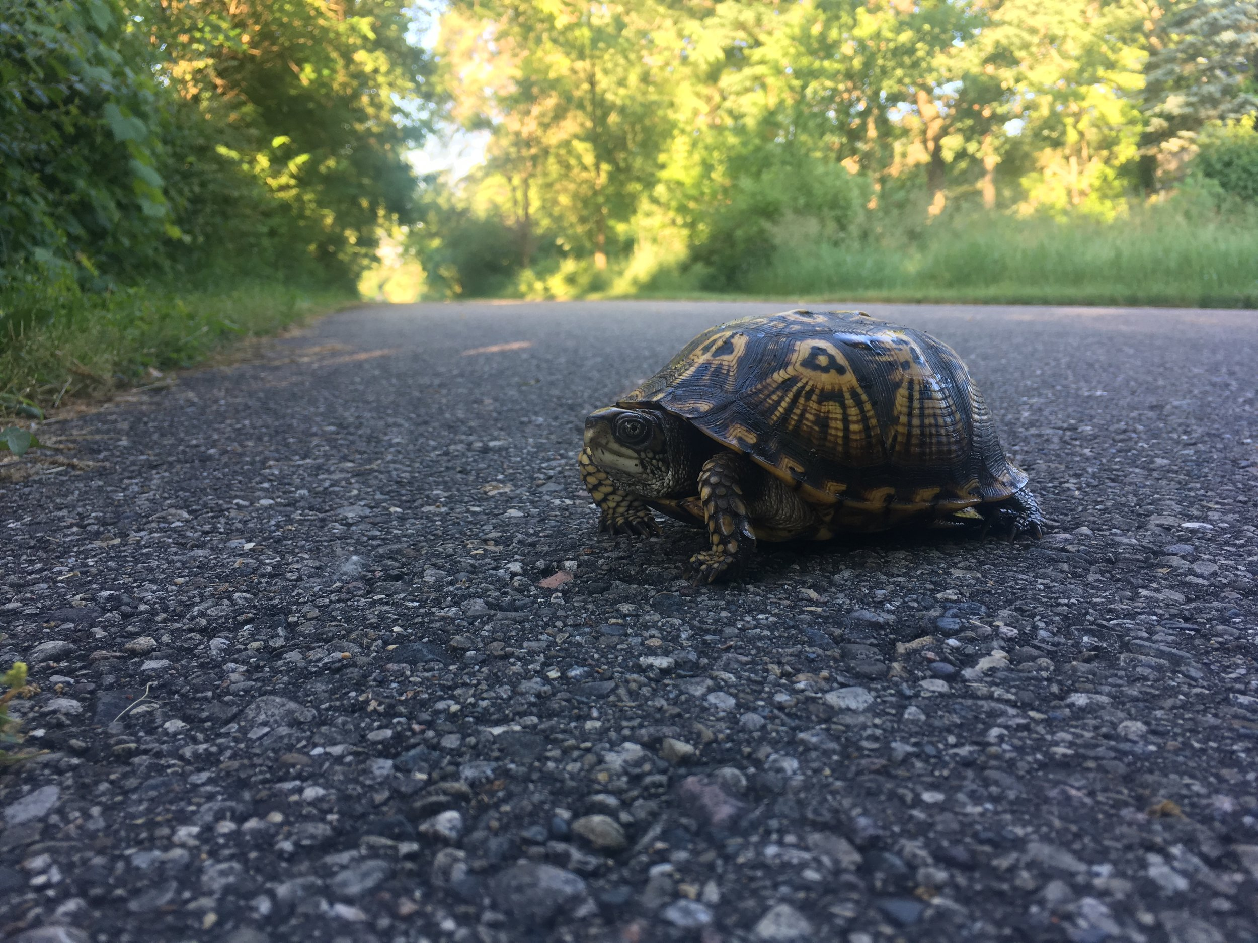 Fellow commuter on the White Pine Trail.