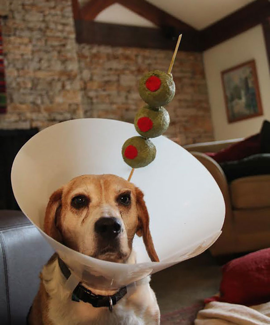 creative-pet-cones-elizabethan-collars-2-1.jpg