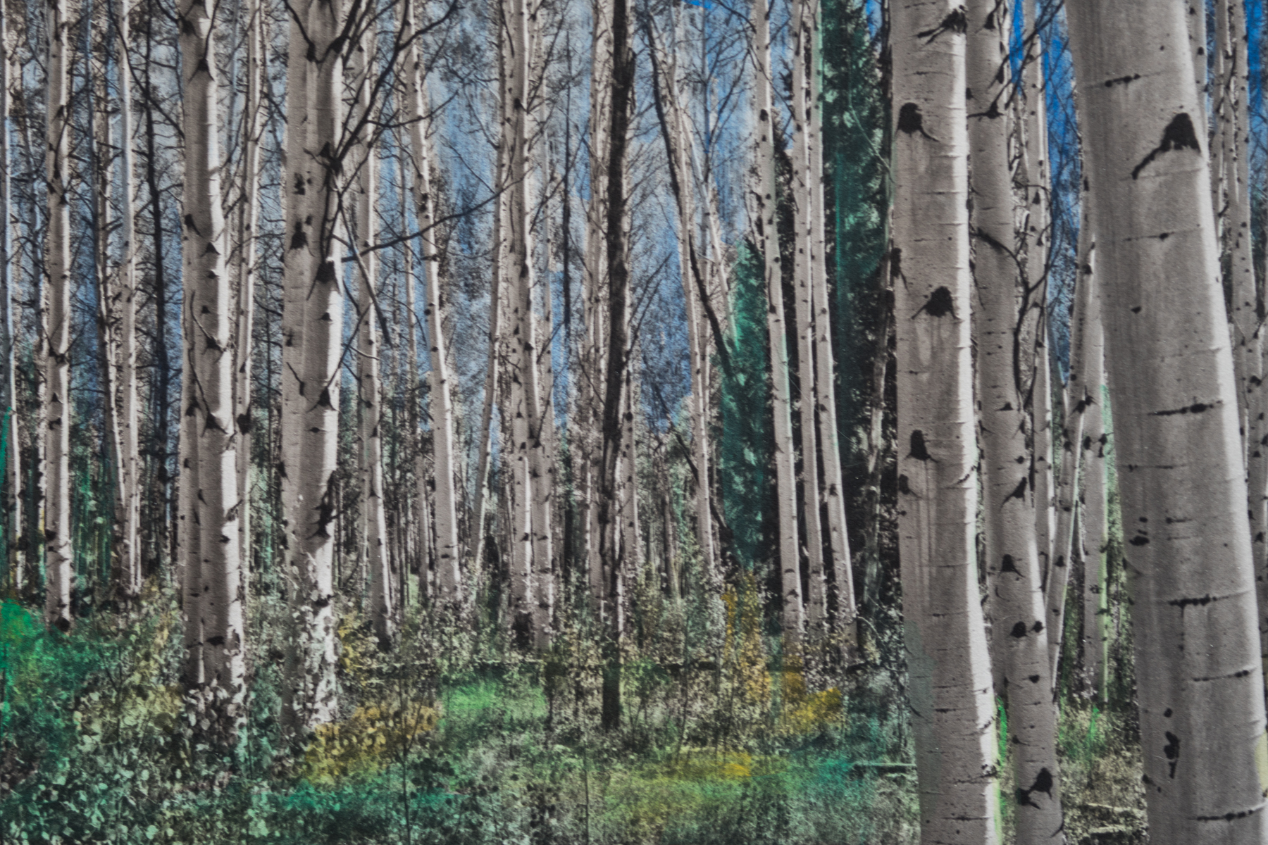 'Aspens'  Watercolor toned Palladiotype on Arches Platine Paper