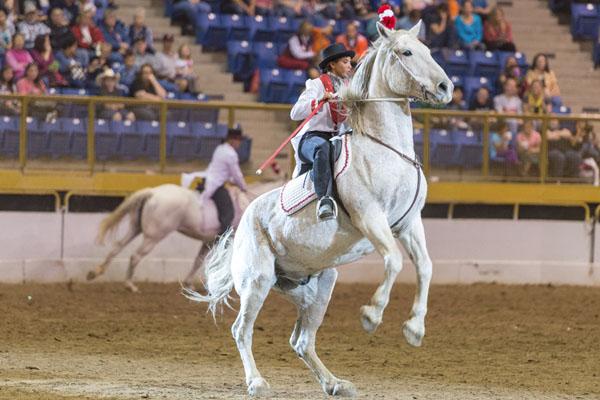 horsecapades-14.jpg