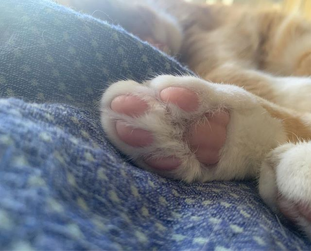 in other news: look at the these little toe beans!!!!