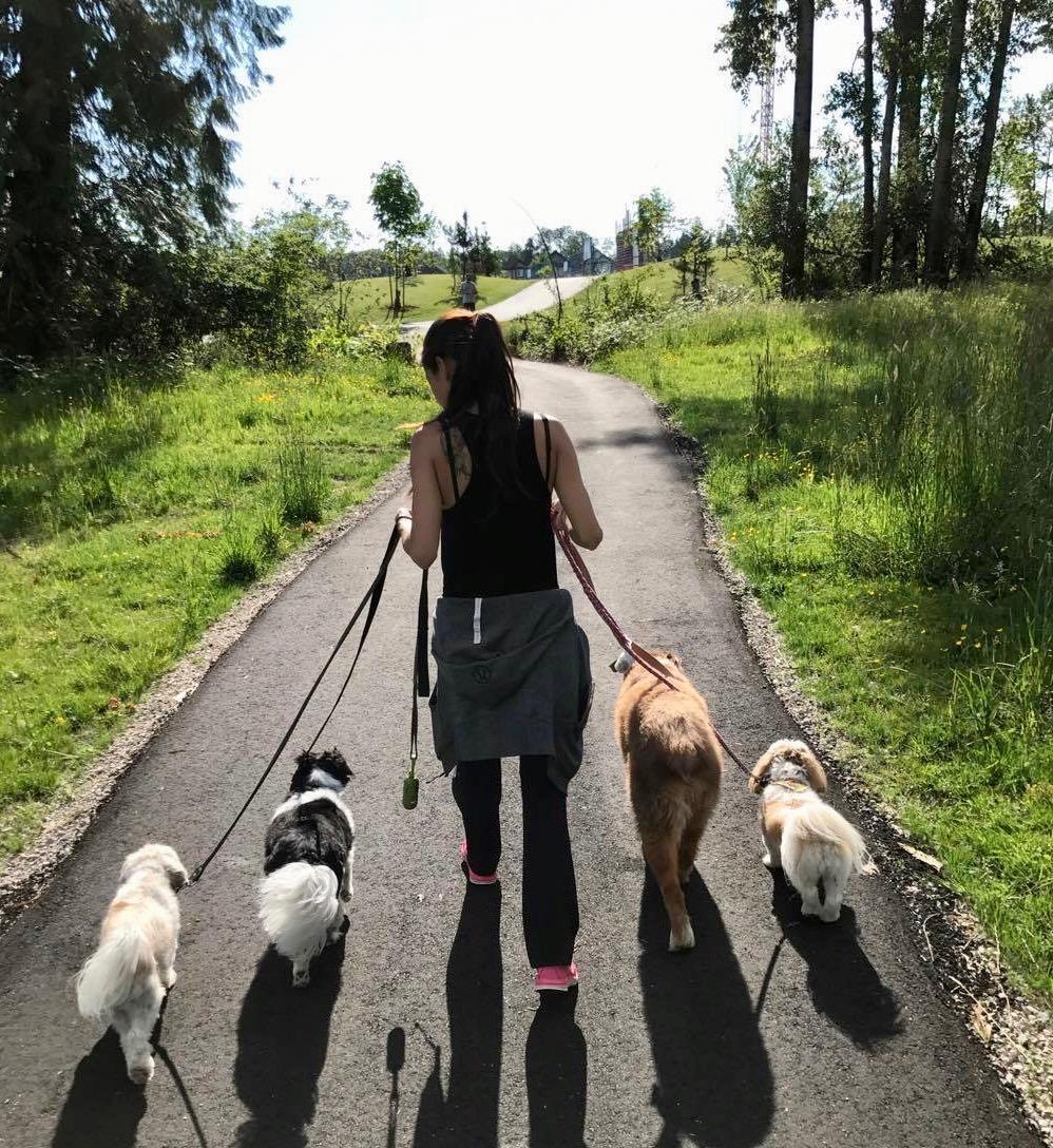 On-leash group walk through Hazelgrove Park, Surrey.