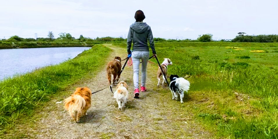 One of our favourite group walk locations, Serpentine Fen.