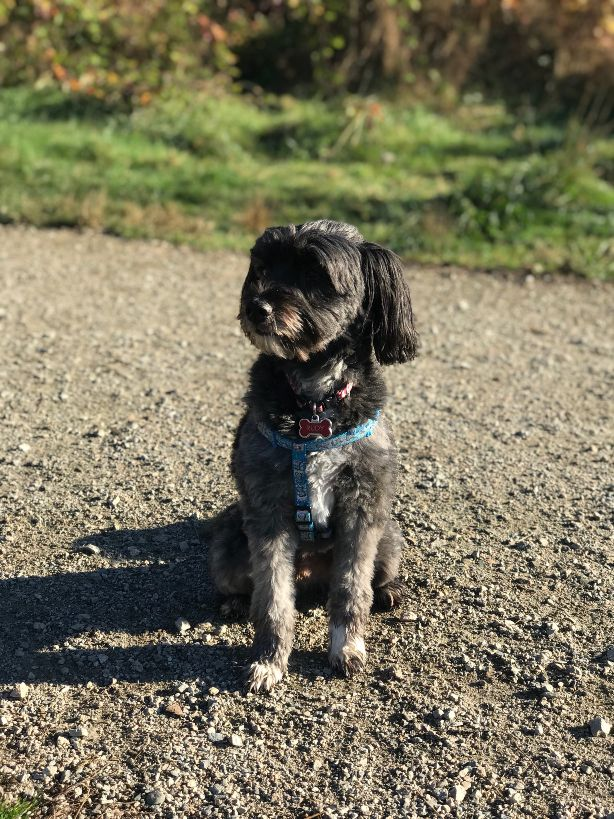 Rudy joined us in Summer 2017 and takes part in our daily group walks in Langley and Surrey.