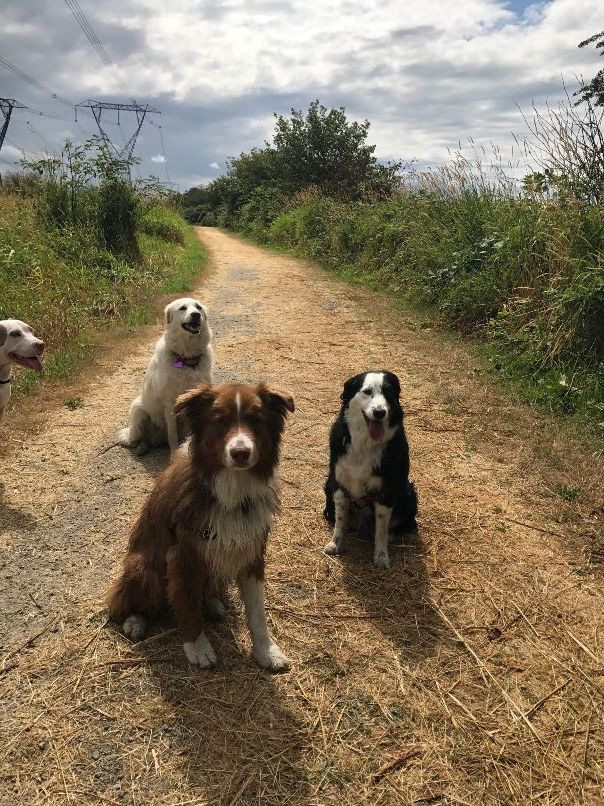 Molly, Panda and River sitting patiently during their walk, waiting for some treats!