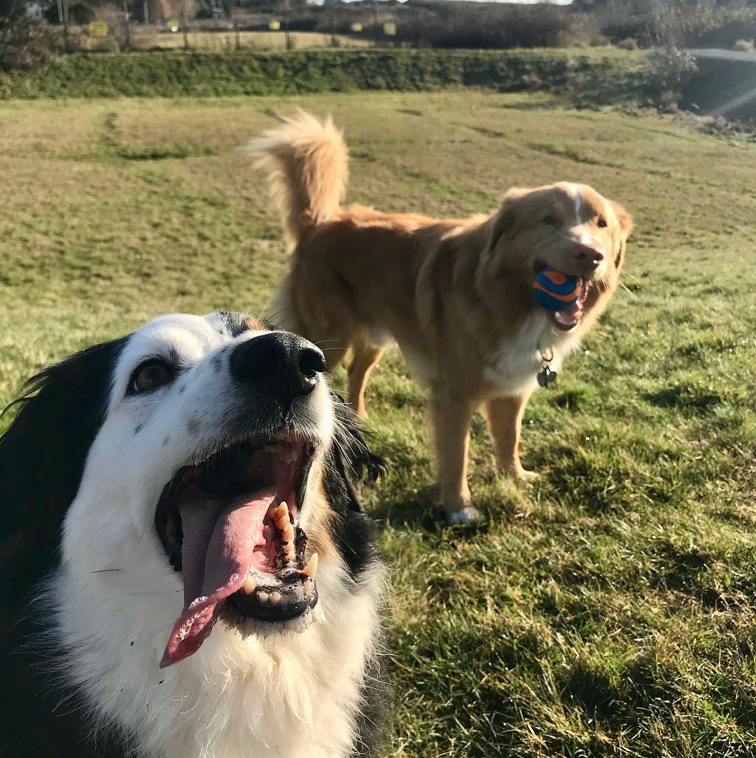 Panda and Duke love playing catch!