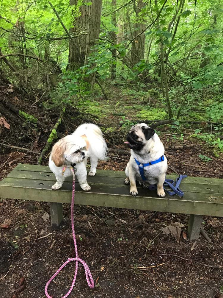 Nazzy and Winston taking a quick break after a one hour group walk.
