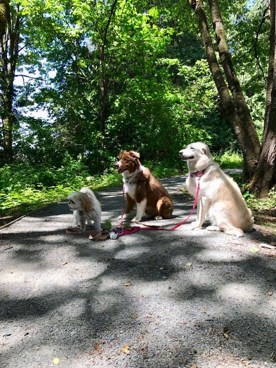 When it's really hot we opt for walks through a nice shady trail to keep the dogs at a healthy temperature.