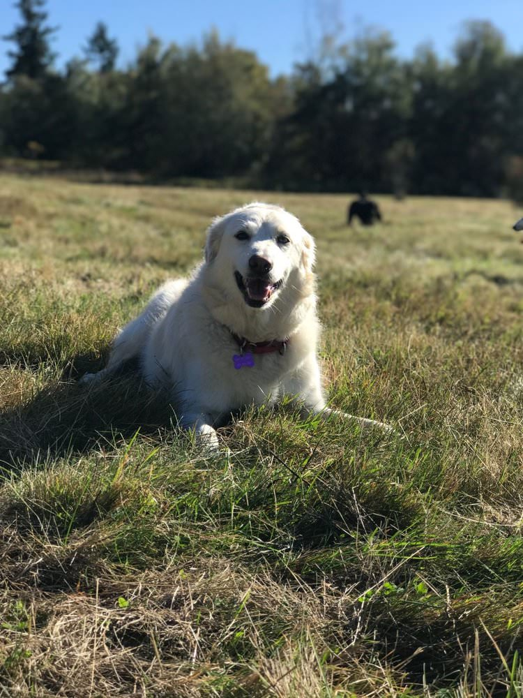 Molly is a group walk regular and loves her Surrey and Langley park adventures.