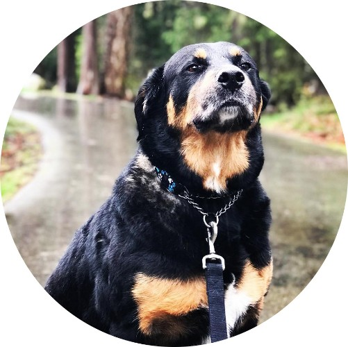 Private Dog Walks Surrey.jpg