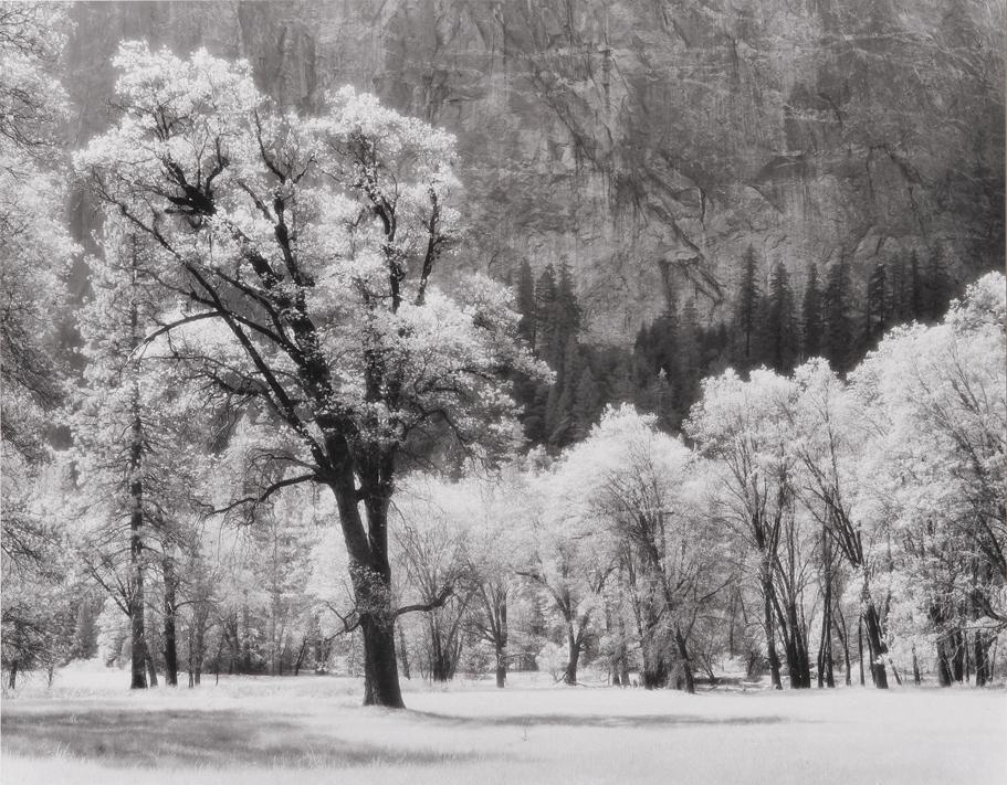 Ansel's Oak Tree, Yosemite National Park, CA, 1992