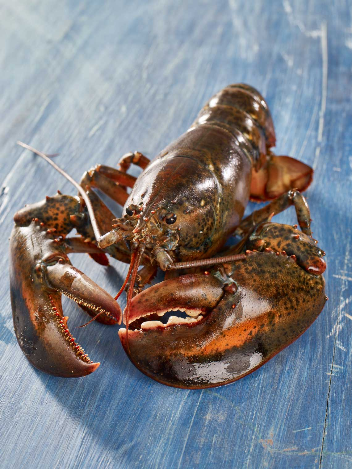 Whole Raw Lobster