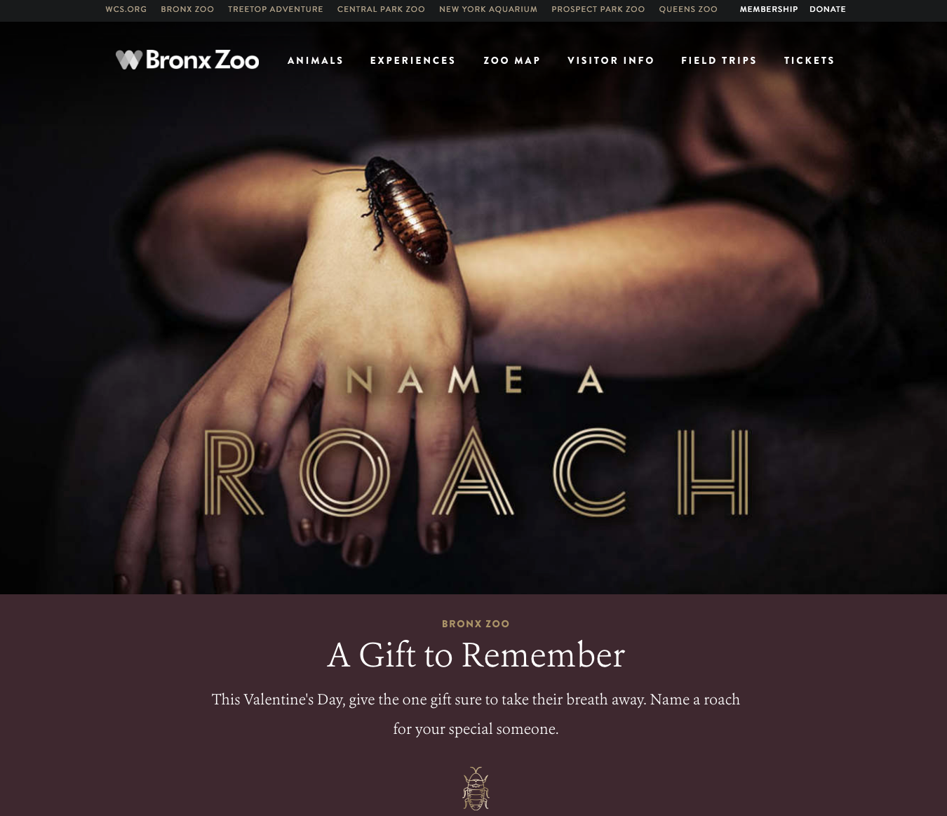 Fun fact: a colony of Madagascar hissing cockroaches can eat a large carrot in a single day. Photo credit: This is a screenshot of the Bronx Zoo's Name A Roach page on their website.