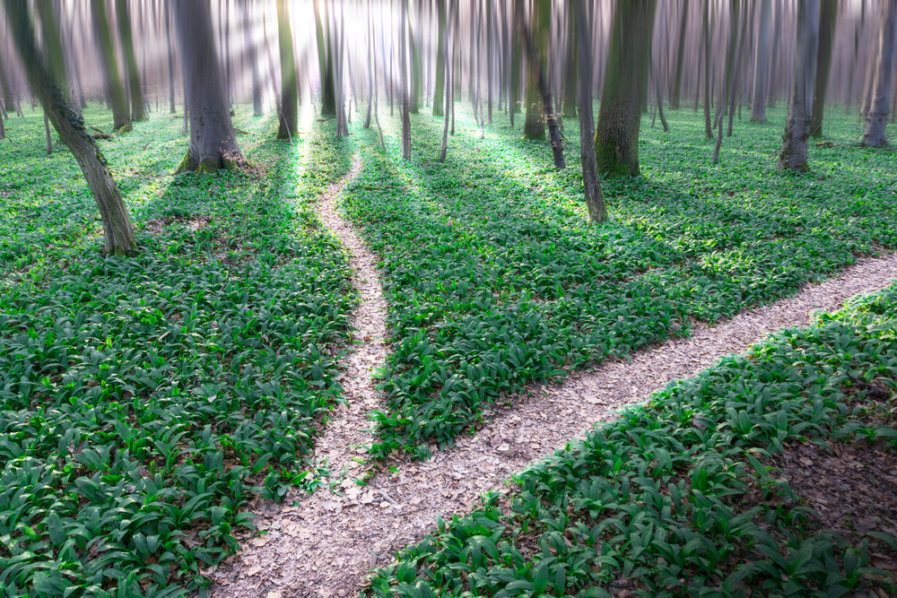 two paths shutterstock purchased.jpg