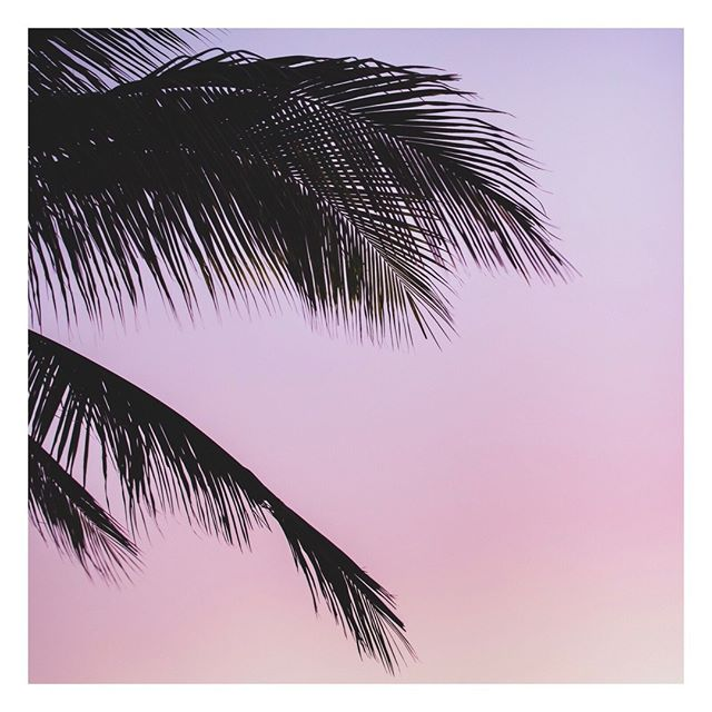 Palm trees, sunsets, and long walks on the beach. 🌴 Vancouver summer is short, enjoy every minute of it!⠀ •⠀⠀ •⠀⠀ •⠀⠀ •⠀⠀ •⠀⠀ #skincare #madeincanada #skin #canadianmade #beautyblogger #shoplocal #healthyskin #collagen #instabeauty #beachday #glow #bronze #tan #tanning #face #skincareroutine #glowingskin #skincareaddict #care #gorgeous #natural #goldenglow #yvrbeauty #yvrbeautyblogger