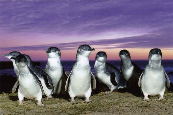 mbt25_penguinparade.jpg