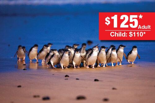 PenguinsDirect_MBT_price.jpg