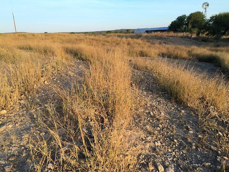 Nov 2013 Klien pasture.jpg