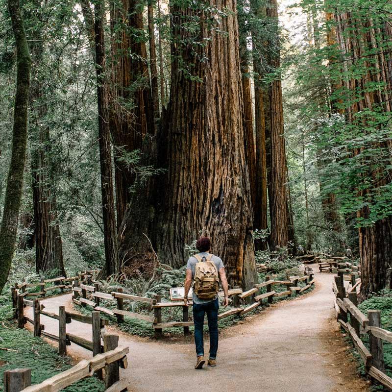800-x-800_Forest-Path.jpg