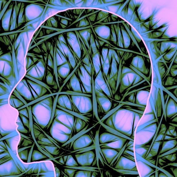 human full body and brain.jpg