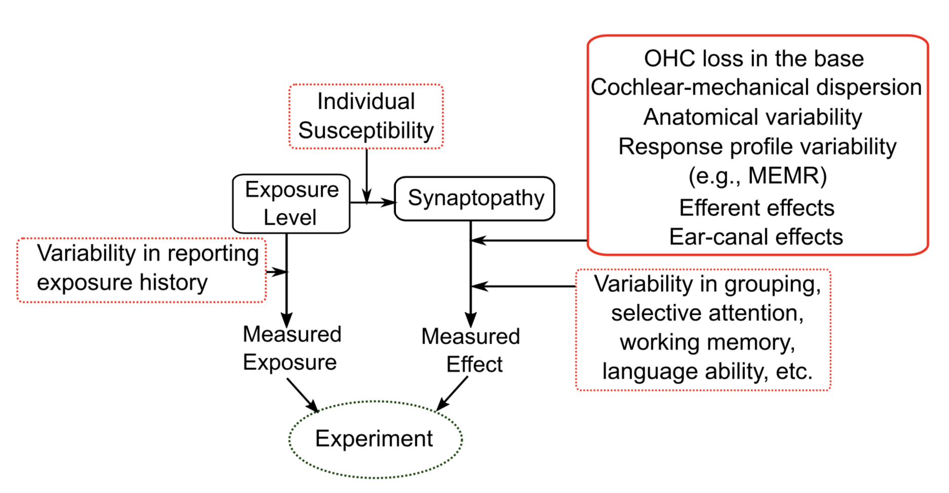 "Emerging Research Grants (ERG) recipients Bharadwaj and Choi, and colleagues, systematically investigated the many sources of variability that obscure cochlear nerve damage (""synaptopathy"") to provide recommendations for how best to measure such nerve damage."