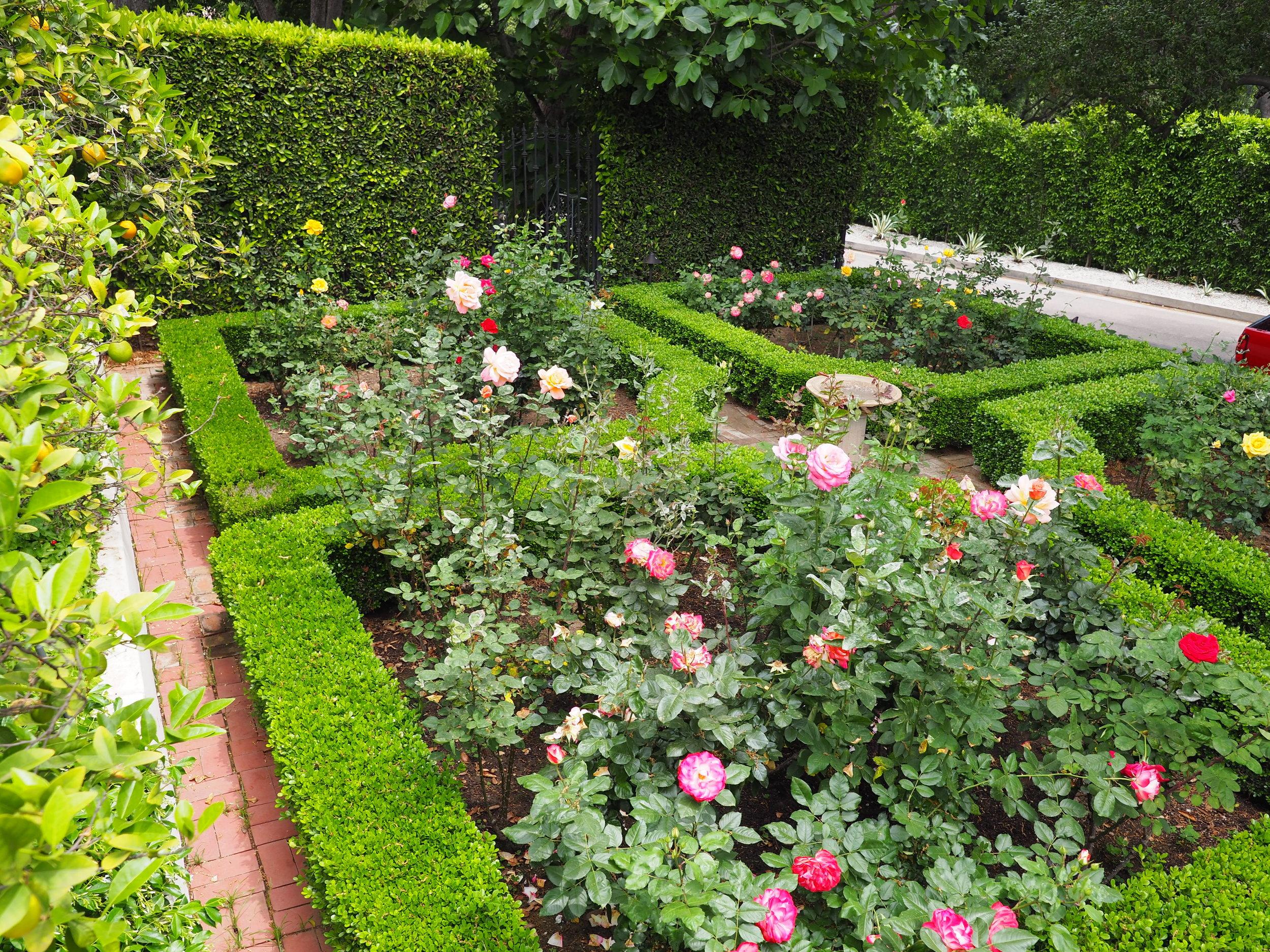 Fairfield 815 rose garden.JPG