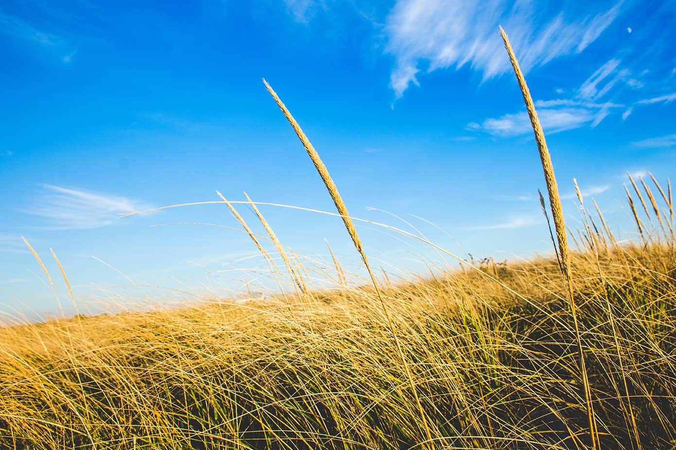 Greys-Beach-1_WEB.jpg