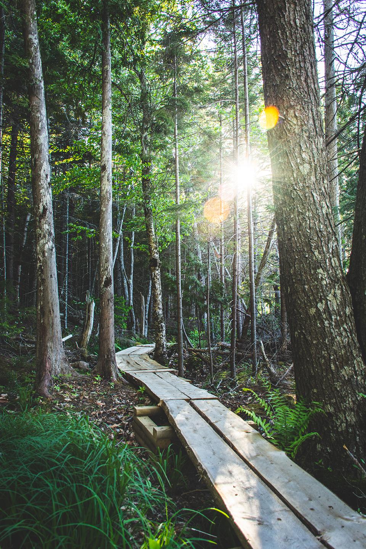 Acadia National Park_WEB.jpg