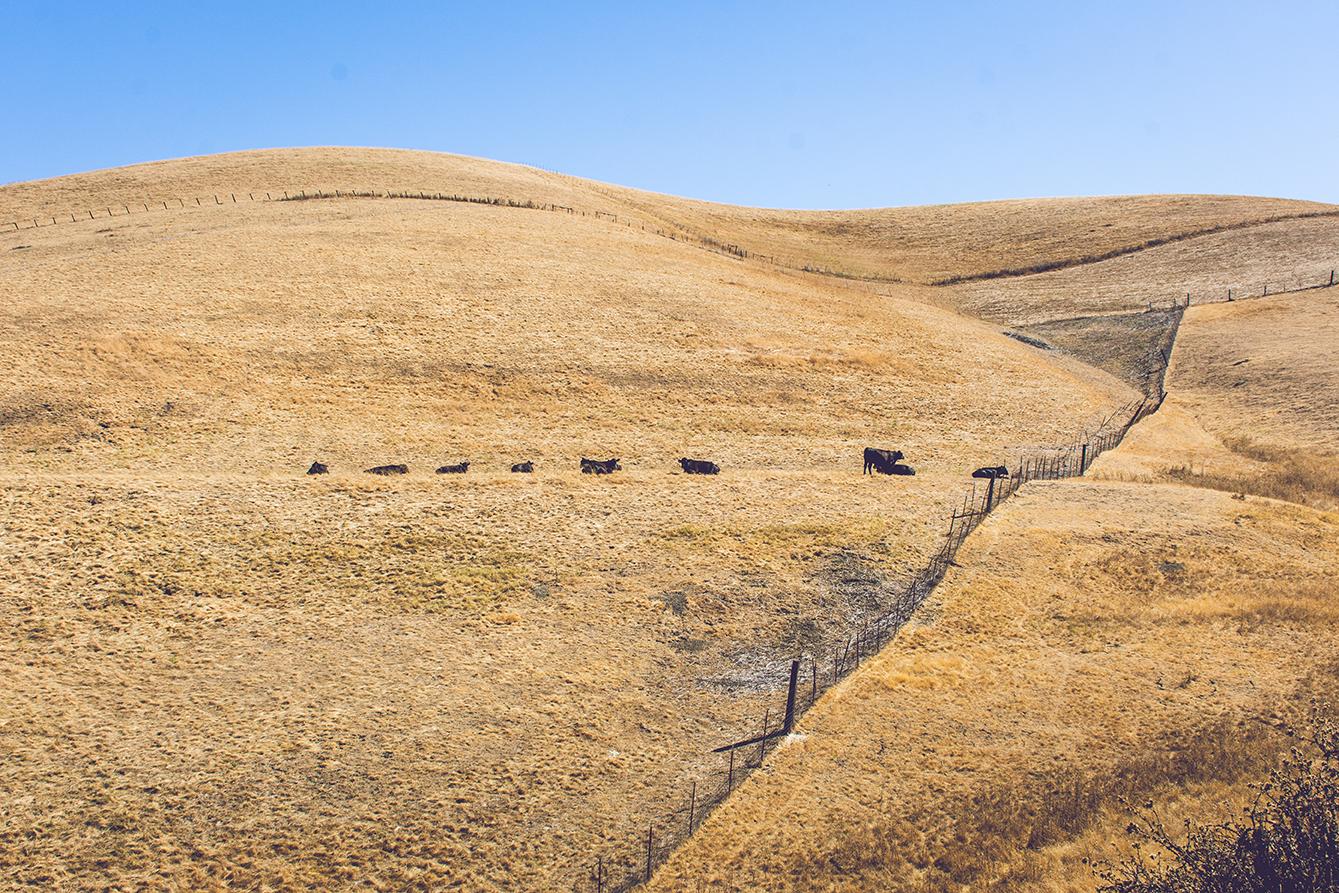 California Landscape_WEB.jpg