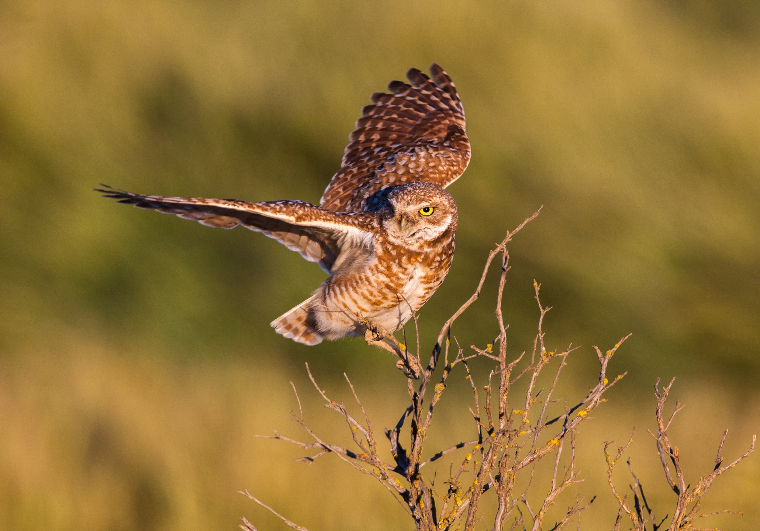 Paul Bannick's startling images reflect behaviors shared by all owls, as well as some surprising exceptions and adaptations.