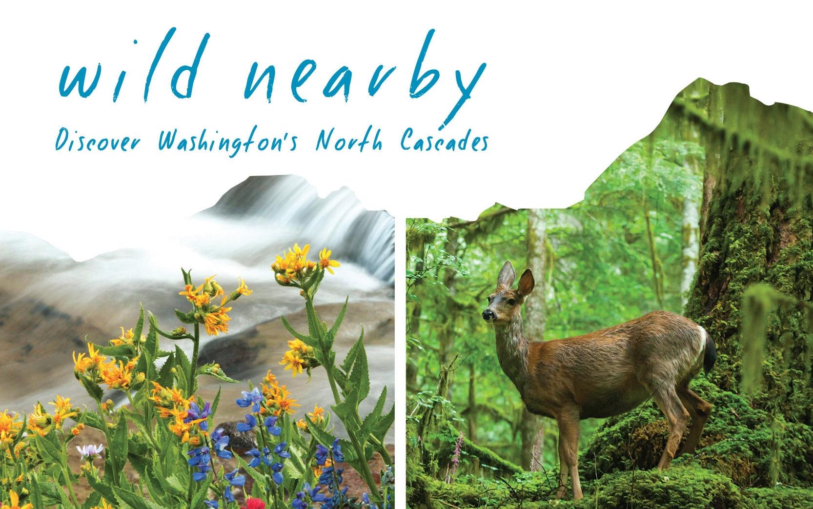 wild-nearby-invite-header52826.jpg