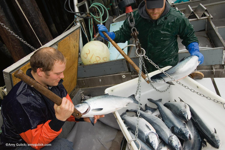 SITT_fishing boat_web.jpg