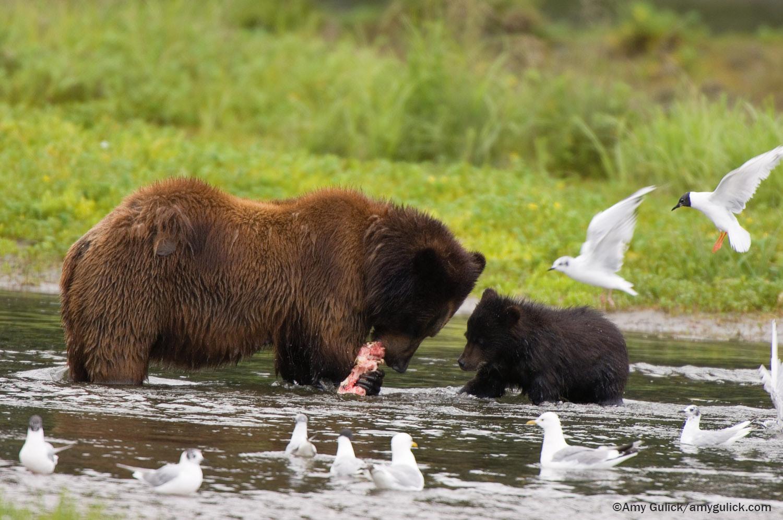 Bears_SITT_web.jpg