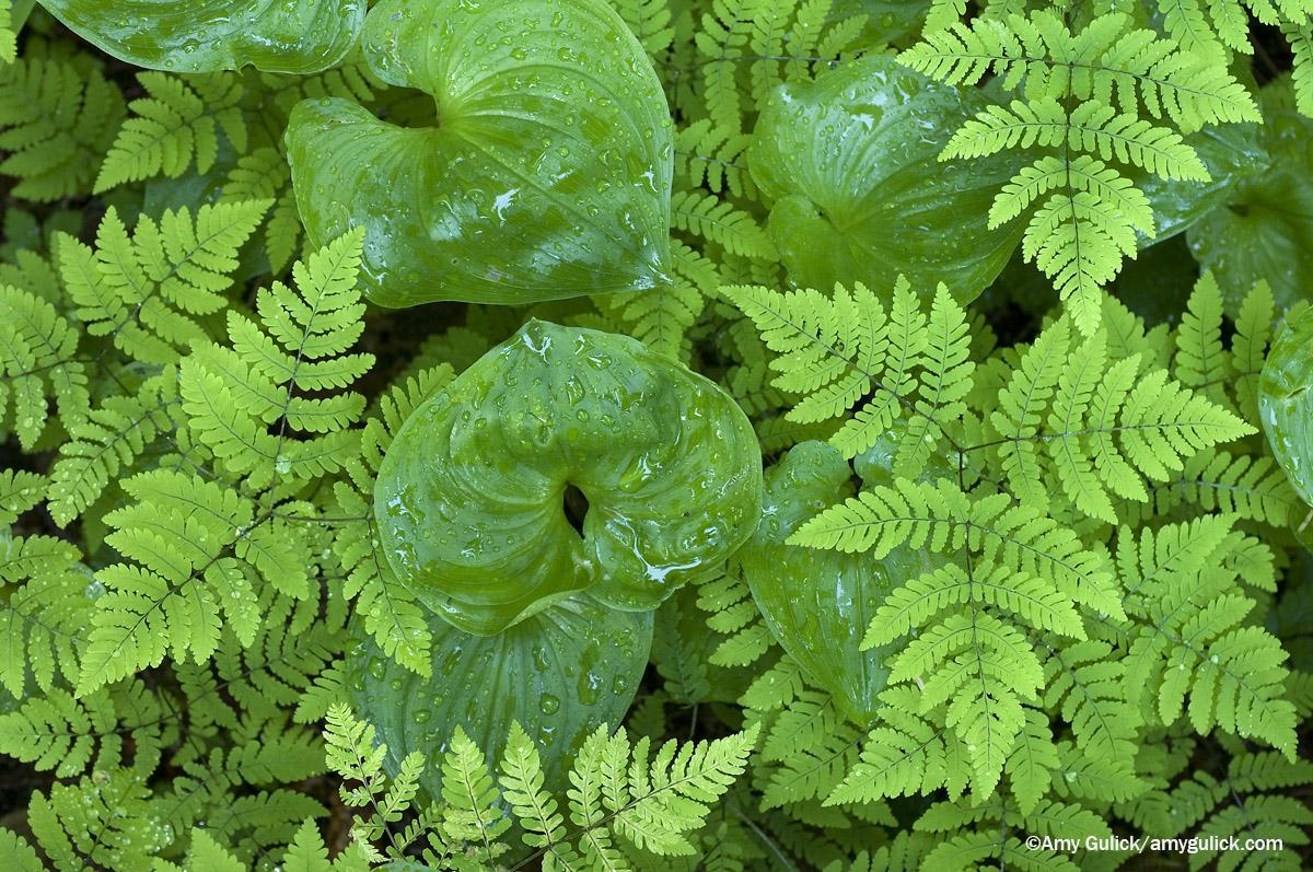 Foliage_SITT_web.jpg