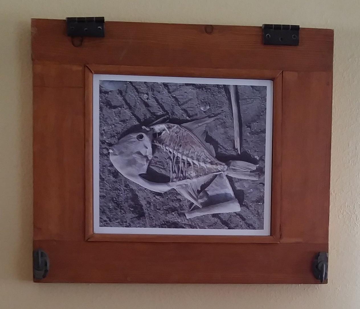 Framed Parrot Fish Skelly.jpg