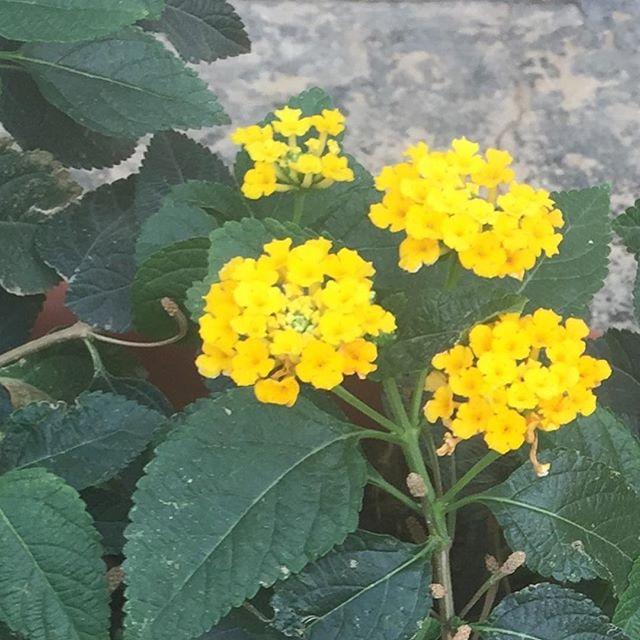 """Where flowers bloom, so does hope."" - Lady Bird Johnson  #blossoms #flowers #hydrangeas #bloom #gardens #landscapes #nature #vintage #homes #architecture #kaduna #Nigeria #agstudioltd #avantgardestudio"