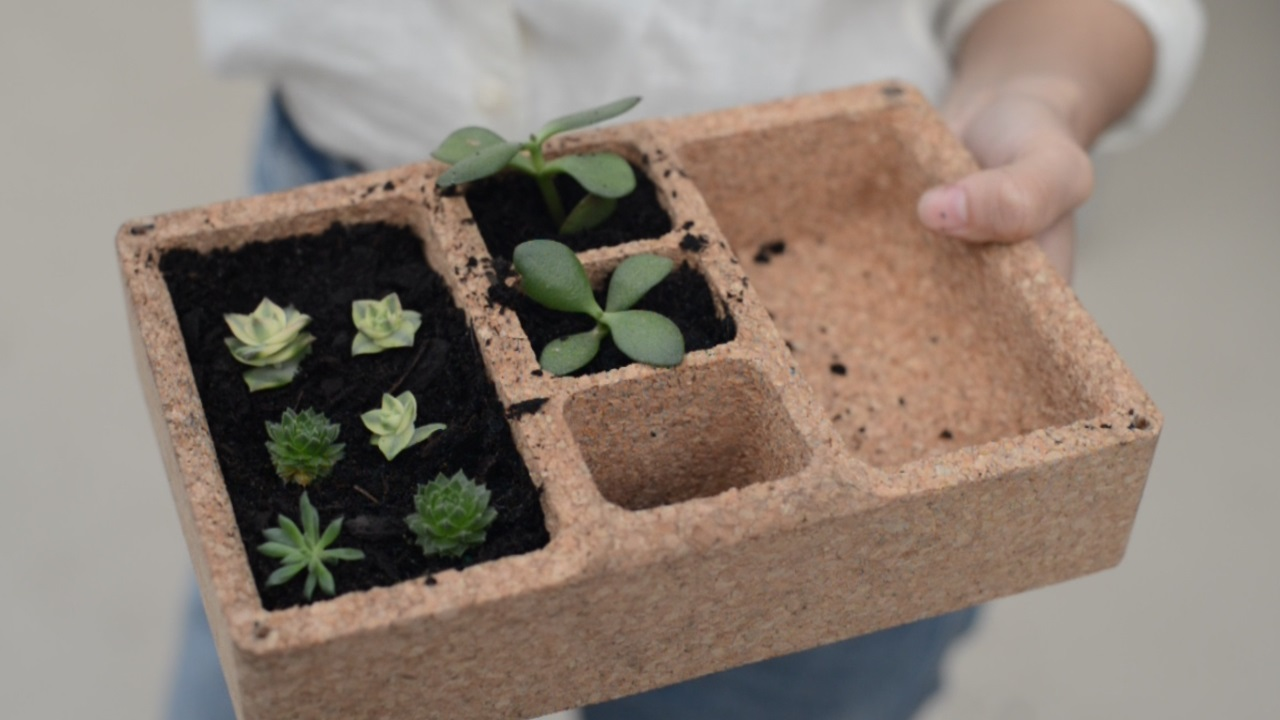 SOL TERRA  A succulent propagation planter for the urban gardener.