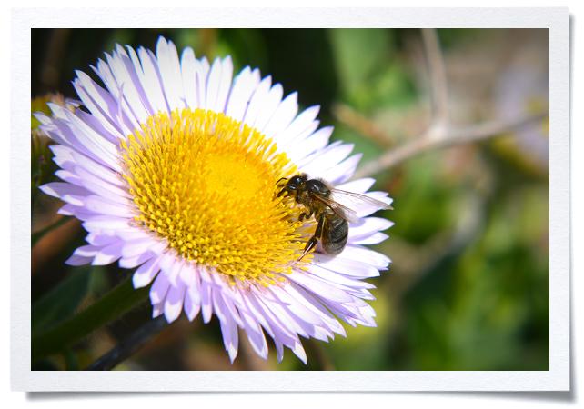 Frame-Bee.jpg