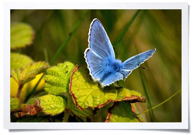 Frame - Butterfly.jpg