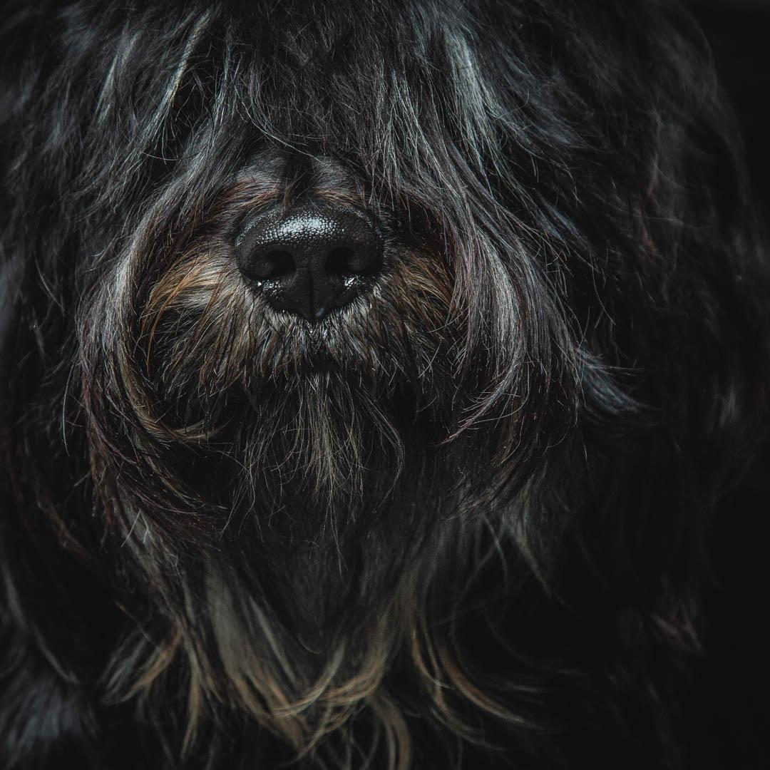 dog_portrait_photograper_bury_st_edmunds012.jpg